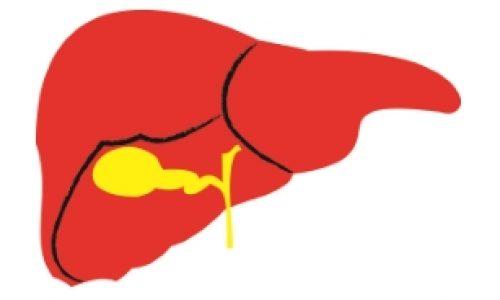 Núcleo de Estudos das Doenças do Fígado